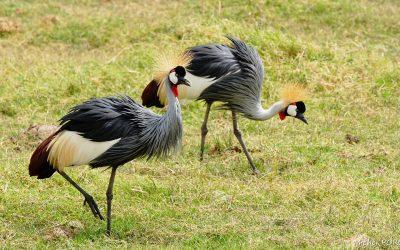 Kenya Oct 2018_023