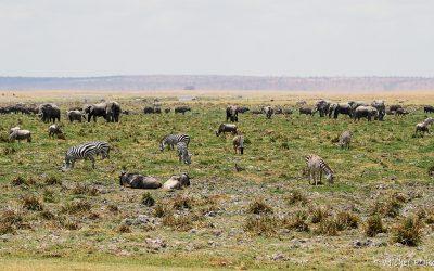 Kenya Oct 2018_080