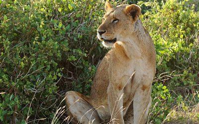 Kenya Oct 2018_143