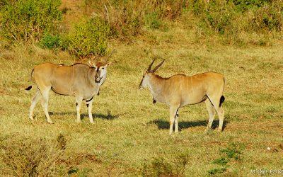 Kenya Oct 2018_144
