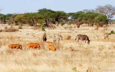Kenya Oct 2018_169